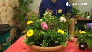 Plantación floral con silene, ranúnculos y caléndulas
