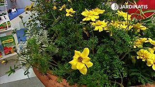 Composición de primavera en tonos verde y amarillo