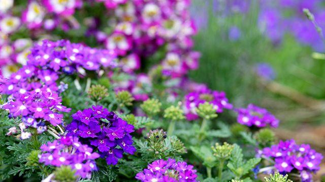 3 plagas muy comunes del jardín y cómo acabar con ellas