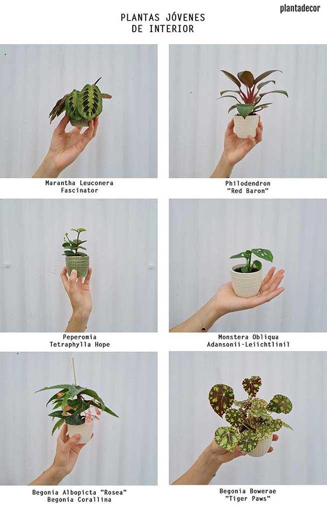 Plantas jóvenes de interior