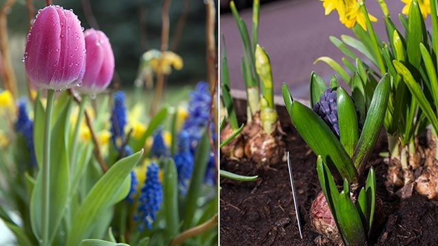 Composiciones florales con tulipanes