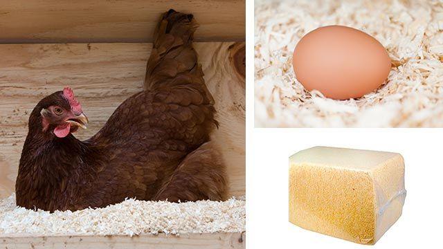 Viruta de madera para mantener seco el nido de las gallinas