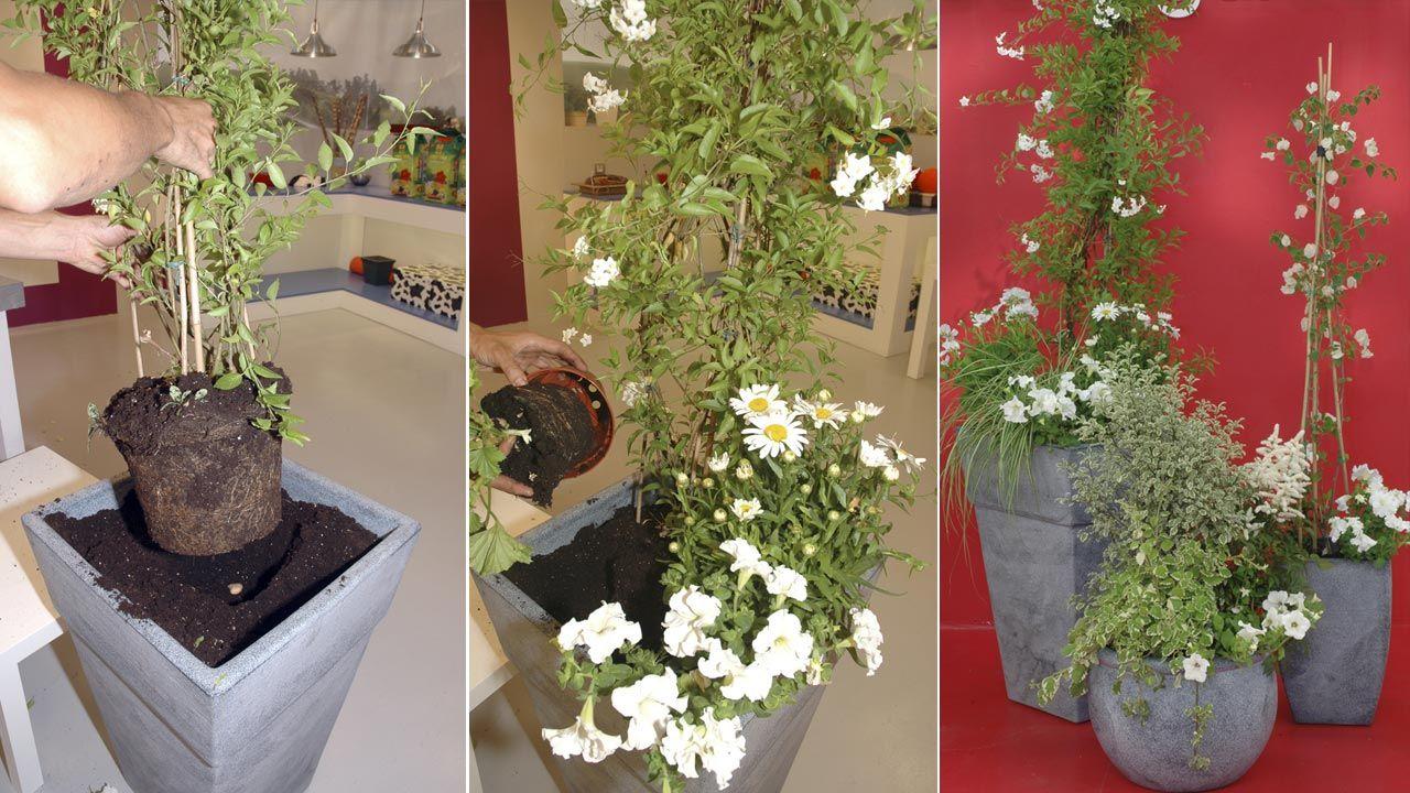 Composición de enredaderas de flor blanca