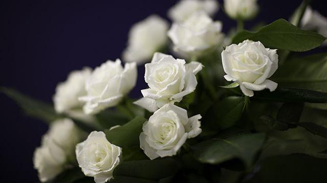 Rosas blancas para regalar a domicilio
