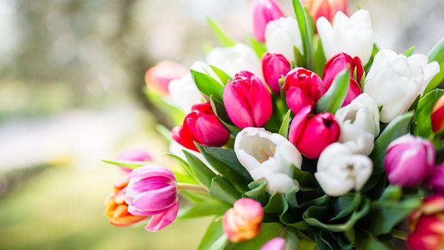 Tulipanes para regalar a domicilio
