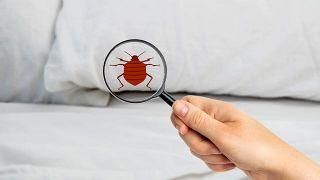Cómo eliminar chinches, garrapatas o pulgas en casa