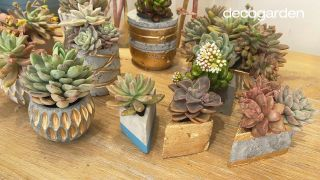 Cómo hacer macetas de cemento DIY para cactus y plantas crasas paso a paso: ¡Reciclando materiales!