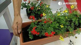 Flores de verano para el balcón