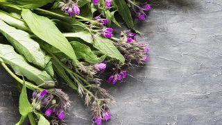Consuelda, planta medicinal antiinflamatoria y cicatrizante - Emplasto