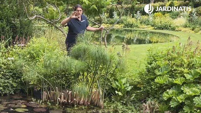 Papiro en el estanque de LUR Garden