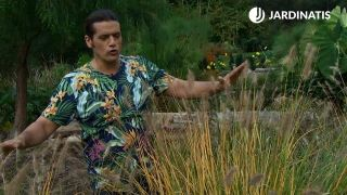 Pennisetum alopecuroides 'Chinese fountain grass'