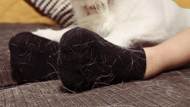 Cómo quitar los pelos de las mascotas: trucos infalibles