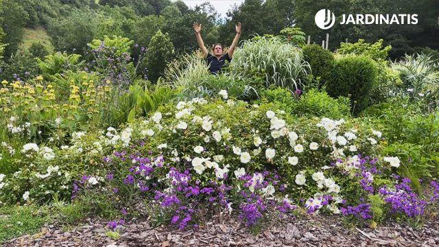 Flores blancas y lilas para el jardín