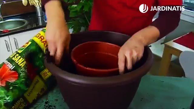 Utilizar el contenedor antiguo como molde a la hora del trasplante