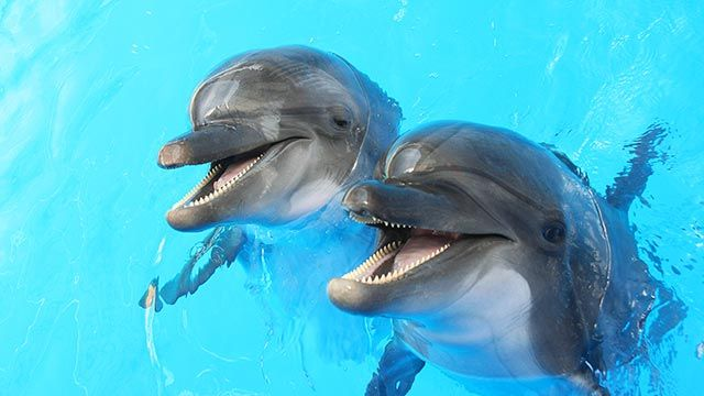 Dos delfines alegres