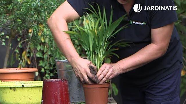 Cómo recuperar una planta con exceso de agua