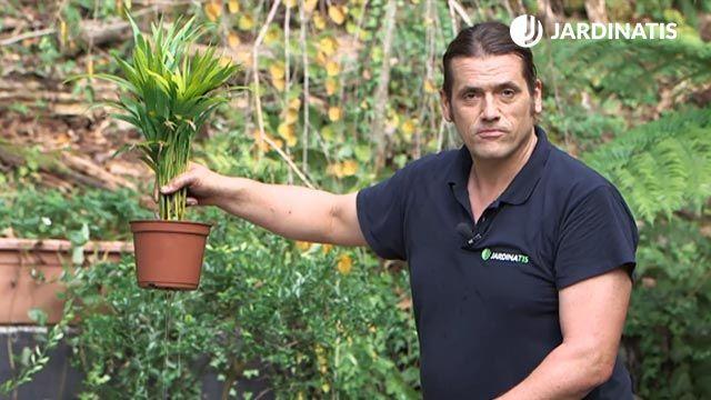 ¿Cómo recuperar una planta con exceso de agua?