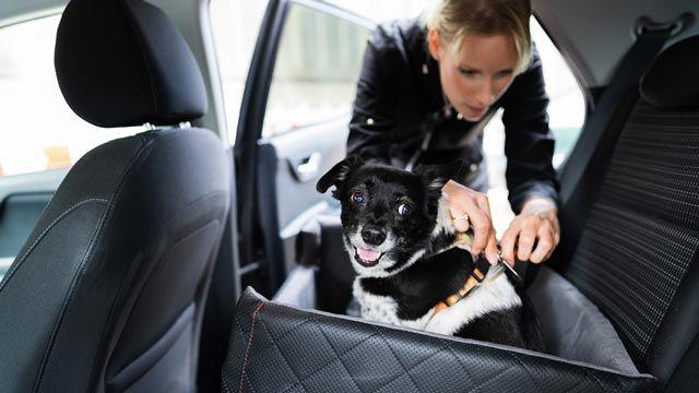 Con quién se queda el perro en caso de divorcio