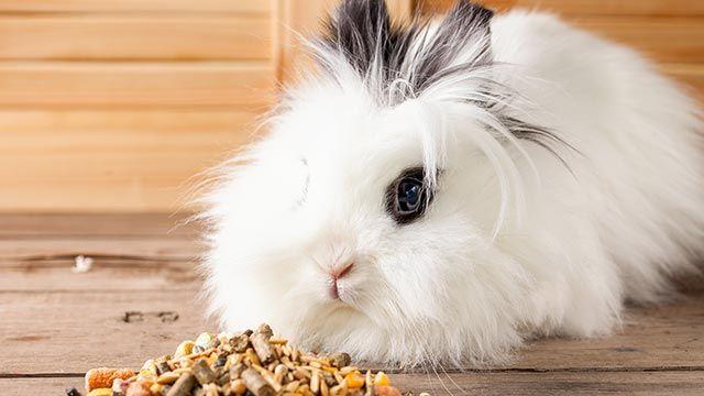Conejo blanco comiendo pienso