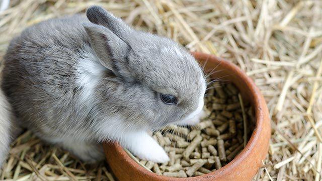 conejo comiendo pienso