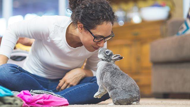 Conejo saludando a su dueña