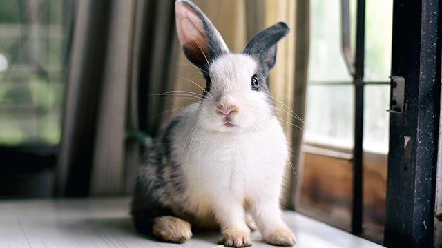 Un conejo sobre una mesa