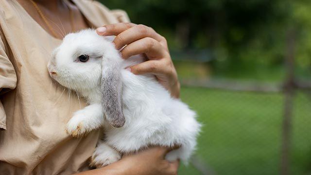 Conejo en los brazos de su dueña