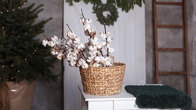 Flores de algodón secas para decorar