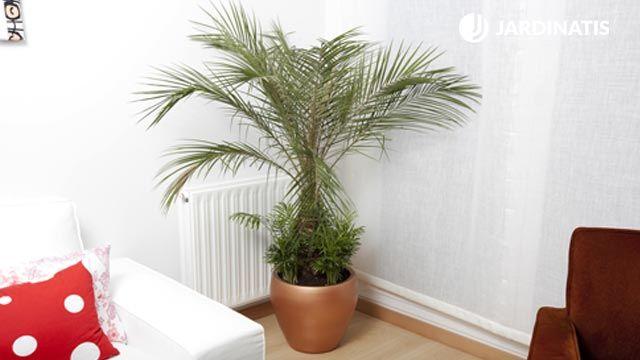 Composición y plantación con una palmera de interior