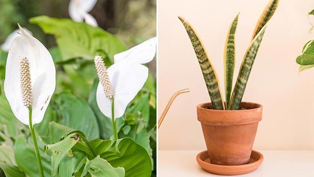 Plantas purificantes para el hogar