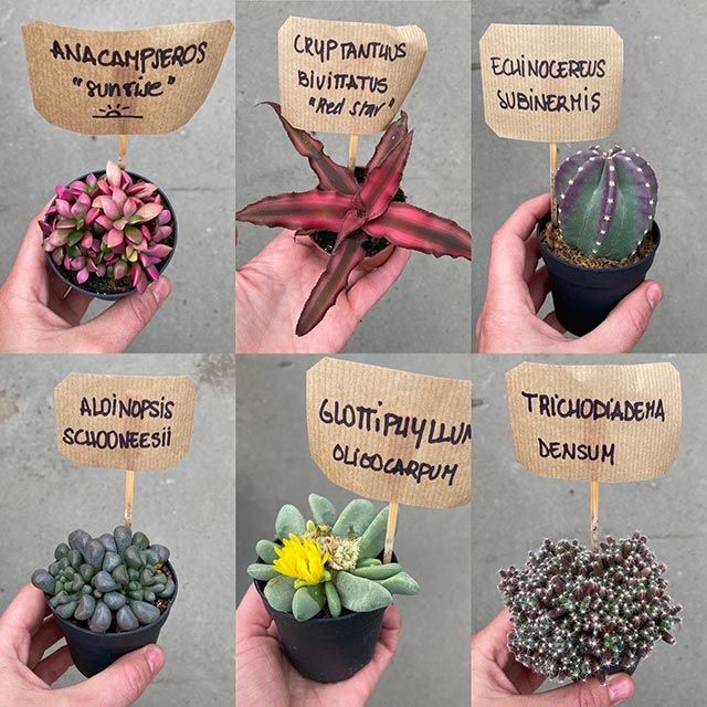 ¿Qué es la nomenclatura botánica?
