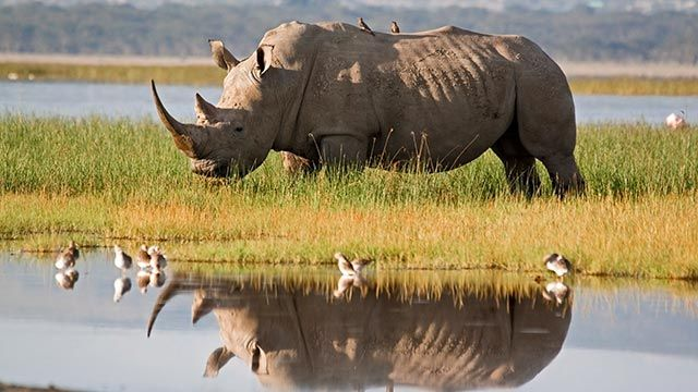 Rinoceronte cerca de una charca