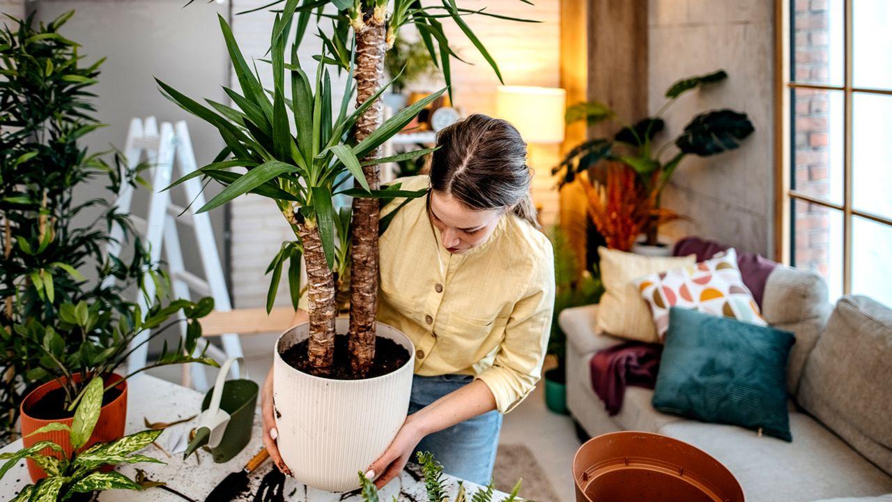 Trucos fáciles para el mantenimiento de tus plantas de interior