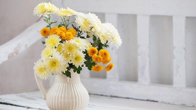Cómo alargar la vida de los crisantemos en el jarrón
