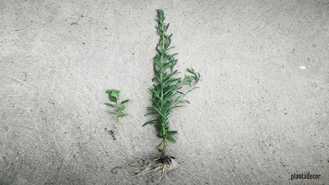 ¿Cómo funcionan las raíces de una planta?