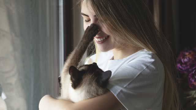 Carácter del gato siamés