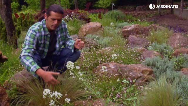 Jardín de rocalla de gran tamaño