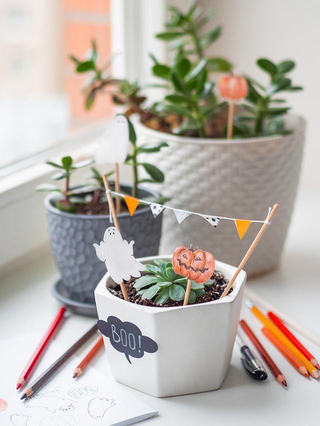 Banderillas de Halloween para decorar plantas de interior