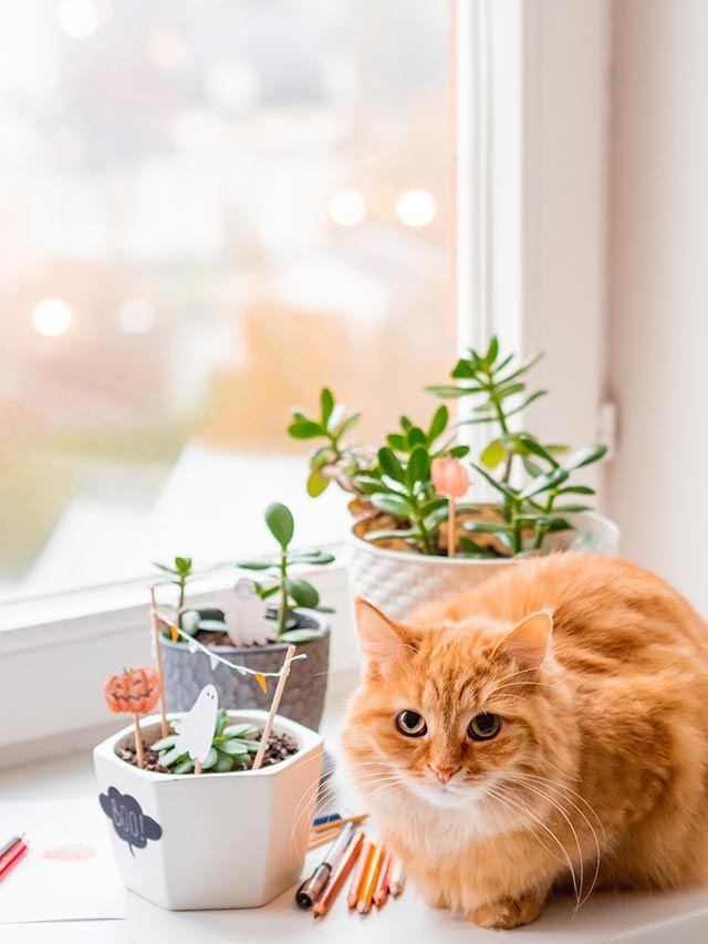 Manualidades de Halloween para decorar plantas de interior