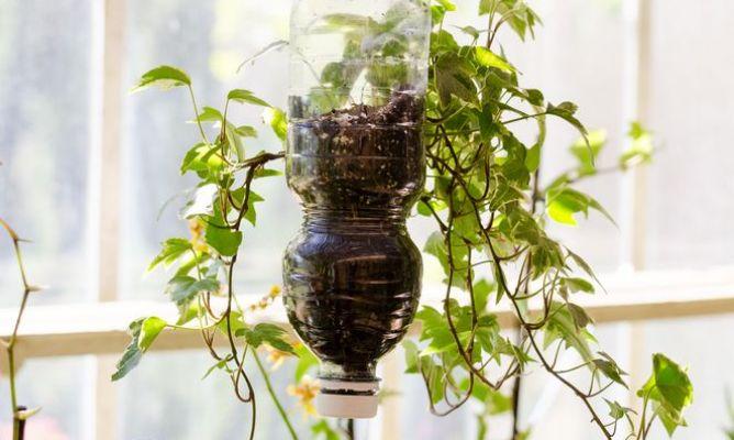 Reciclar botellas para hacer macetas en la comunidad de - Hogarmania jardineria ...