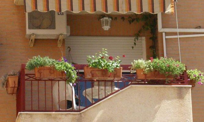 Composici n plantas balc n en la comunidad de jardiner a - Plantas de balcon ...