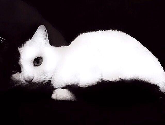 gato Moazart- ganador septiembre 2014