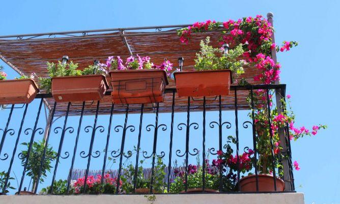 Mi patio en la comunidad de jardiner a - Hogarmania jardineria ...