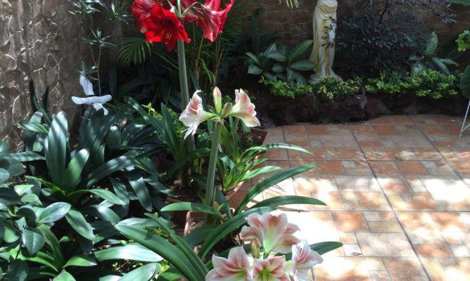 Lirios en la comunidad de jardiner a - Hogarmania jardineria ...