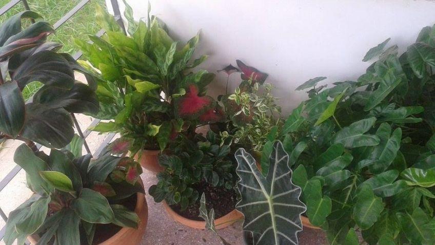 Flores de mi jardin en la comunidad de jardiner a - Hogarmania jardineria ...