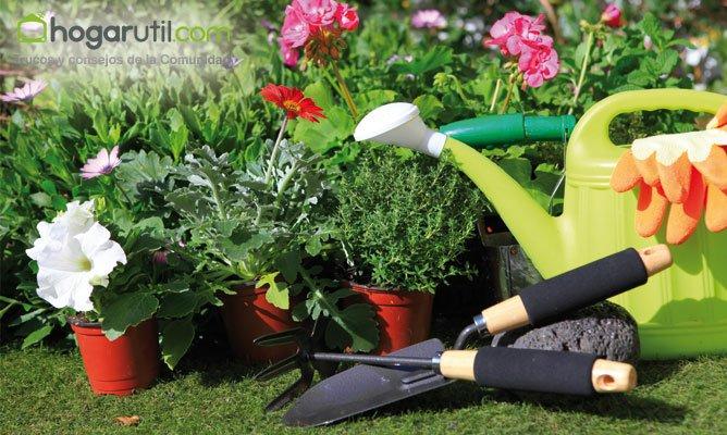 Recomendaciones para siembra y cultivo de lavanda en la - Hogarmania jardineria ...